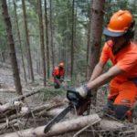 Stabilizzazione operai idraulico-forestali